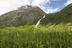 Aménagez en parc avec du blé, les montagnes et la cascade, Norvège Photos stock