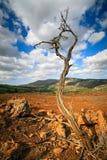 Aménagez en parc avec l'arbre mort sur l'île Crète Image stock