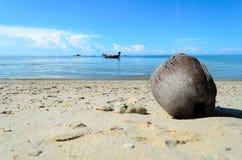 Aménagez en parc avec la noix de coco et la mer sous le ciel bleu pendant le matin photos libres de droits