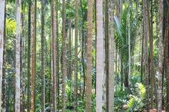 Aménagez en parc avec la rangée droite d'arbre au jour d'été Photo stock