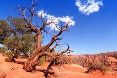 Aménagez en parc avec le ciel bleu et les arbres dans le Colorado images stock