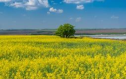 Aménagez en parc avec le gisement fleurissant de graine de colza près de la ville de Dnipro en Ukraine centrale image stock
