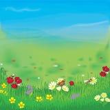 Aménagez en parc avec le pré, l'herbe, les fleurs, le ciel et le regain Images stock