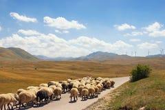 Aménagez en parc avec les pâturages jaunes, le troupeau de moutons marchant le long de la route et les moulins à vent sur le fond Photo libre de droits
