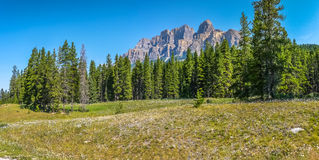Aménagez en parc avec Rocky Mountains et des fleurs, Alberta, Canada Photo stock