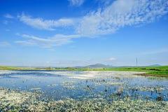 Aménagez en parc avec un lac plein des fleurs sur l'eau Images stock