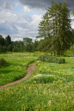 Aménagez en parc avec une route à travers un champ, fleurs de champ photographie stock libre de droits
