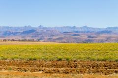 Aménagez en parc d'Afrique du Sud, montagnes du ` s de dragon Photographie stock libre de droits