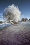 Aménagez en parc dans l'infrarouge du lac dans la campagne anglaise en été Images libres de droits