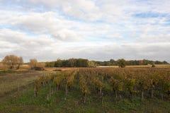 Paysage en Bordeaux en automne image stock