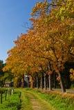Aménagez en parc en automne d'une route avec des arbres Image stock