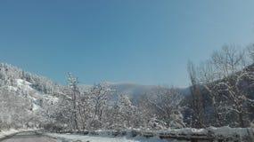 aménagez en parc, jour d'hiver, temps, vue, forêt Photo libre de droits