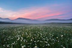 Aménagez en parc, la brume de matin, aube sur un champ de camomille dans les montagnes Photographie stock