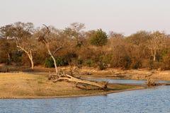 Aménagez en parc en parc national de Kruger avec sa nature sauvage parfaite pour des safaris en août, l'Afrique du Sud photo libre de droits