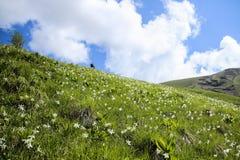 Aménagez en parc sur la colline, avec l'herbe verte, la forêt et le ciel bleu Photographie stock