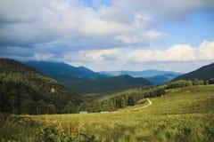 Aménagez en parc sur la colline, avec l'herbe verte, les arbres et le ciel bleu Photo libre de droits