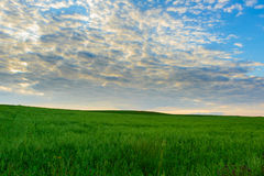 Aménagez en parc sur un pré et un ciel merveilleux au coucher du soleil Images stock