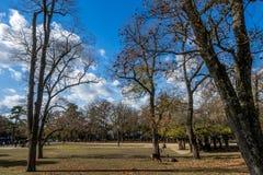Aménagez l'image en parc avec le parc et les cerfs communs dans la forêt d'automne Photos stock