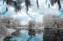 Aménagez la forêt et le lac en parc, photo infrarouge Photo stock