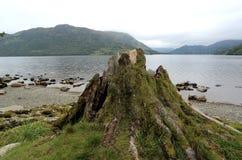 Aménagez la photo en parc d'un lac avec le tronc d'arbre Photos stock