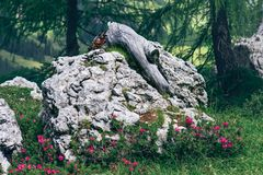 Aménagez la pierre en parc avec une racine dans la forêt images stock