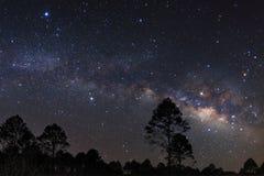 Aménagez la silhouette en parc de l'arbre avec la galaxie de manière laiteuse et le dus de l'espace Image libre de droits