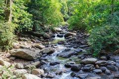 Aménagez la vue du courant de l'eau et basculez en parc profondément dans la forêt Image stock