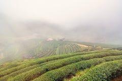 Aménagez la vue en parc à la plantation de thé 2000 pendant le matin sur un brumeux Photographie stock