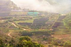 Aménagez la vue en parc à la plantation de thé 2000 pendant le matin sur un brumeux Image libre de droits