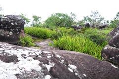 Aménagez la vue en parc d'herbe dans la roche cassant Phu Hin Rong Kla Phitsanulok Photo stock