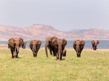 Aménagez la vue en parc d'un troupeau d'éléphants avec un contexte de montagne Images libres de droits