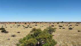 Aménagez la vue en parc des plaines de prairie dans le Kalahari images libres de droits