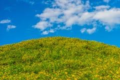 Aménagez la vue en parc du champ de diversifolia de Tithonia et du ciel bleu Photos libres de droits