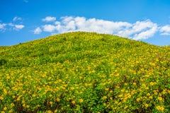 Aménagez la vue en parc du champ de diversifolia de Tithonia sur la montagne avec le ciel bleu Photographie stock libre de droits