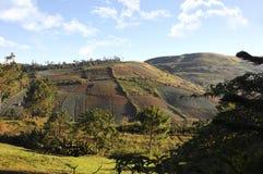 Aménagez le champ en parc sur le phitsanulok de kla de rong de hin de phu de montagne Photographie stock libre de droits