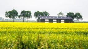 Aménagez le gisement de graine de colza et une grange en parc industriial moderne Images stock