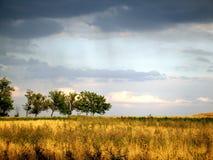 Aménagez les nuages de tempête au-dessus du champ de blé et les arbres en parc sur un summe Image libre de droits