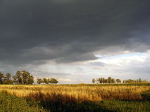 Aménagez les nuages noirs au-dessus du champ et les arbres en parc un jour d'été Images libres de droits