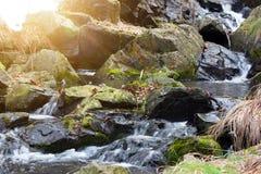 Aménagez un courant en parc de montagne Image stock
