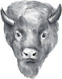 Américain Bison Head Watercolor Photo libre de droits