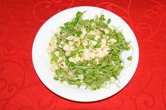 Amêndoa dos sprouts de feijão Imagem de Stock Royalty Free