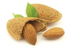 Amêndoa e semente Imagem de Stock