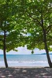 Amêndoa gêmea do mar na linha costeira fotos de stock royalty free