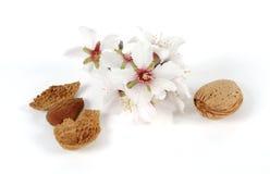 Amêndoas e flores Fotografia de Stock