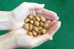Amêndoas frescas nas mãos Fotografia de Stock