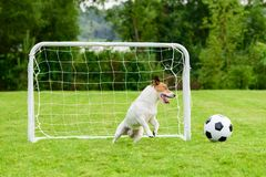 Amüsanter Torhüter steuert gehendes vergangenes Ziel des Fußballfußballs stockbild