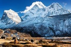 Ama Dablam -尼泊尔的晚上视图 免版税库存图片