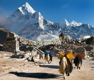 Ama Dablam with caravan of yaks and prayer flags Royalty Free Stock Image