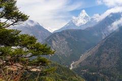 Ama Dablam halny szczyt i sosna, Everest region, Nepal Zdjęcia Royalty Free
