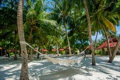 Amaca fra le palme alla spiaggia tropicale Fotografia Stock